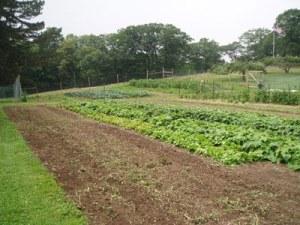 SHTF Farming 2