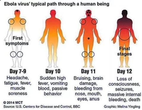 ebola path